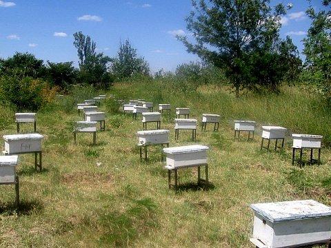Bijenkorven van het Imkerproject in Eritrea